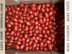 Picture of Red Mini Plum Tomatoes