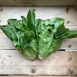 Picture of Little Gem Lettuce x 2
