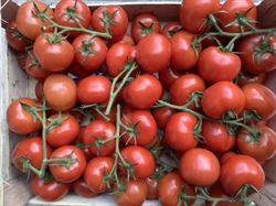 Picture of Vine Tomatoes