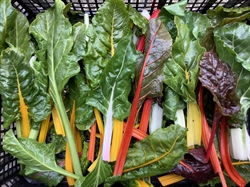 Picture of Baby Rainbow Chard