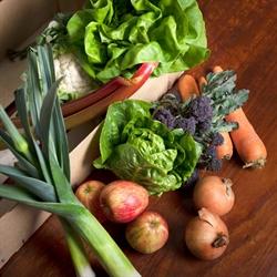 Picture of Seasonal Fruit & Veg Box, Small