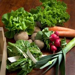 Picture of Organic Seasonal Veg Box, Small