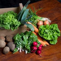 Picture of Organic Seasonal Veg Box, Large